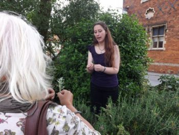 Learning about rosemary (Rosmarinus officinalis) on the Urban Herb Walk - so much more than using in cooking!